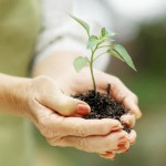 Seedling Image