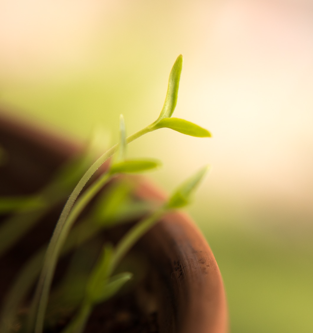 Shoots of a green plant in a terra cotta pot representing growth and perseverance